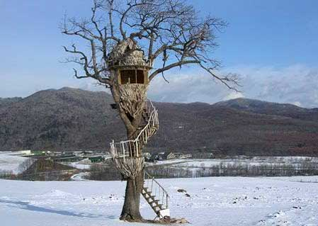 Smallest Tree House In The World wonderful smallest tree house in the world 4 joshua throughout decor